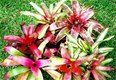 Bromeliads - contact us